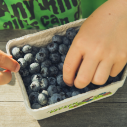 child eating blueberries